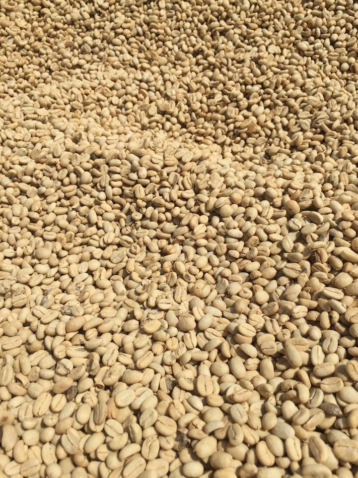 Etiopia, el origen del café arábica