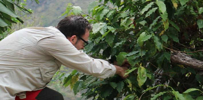 cafe saula nepal