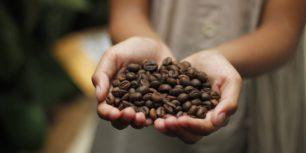 componentes en un grano de café